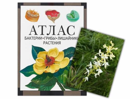 Атлас-растений-для-детей
