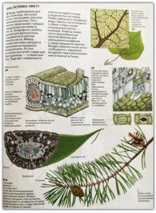 Атлас растений для детей