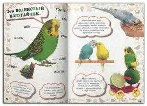 Моя-первая-книга-о-животных Попугаи