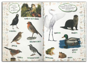 Моя-первая-книга-о-животных Птицы