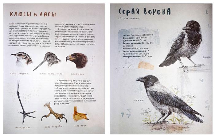книга-про-птиц
