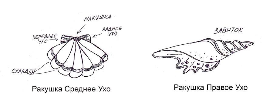 Современная детская сказка бабушки Ксю про ракушки